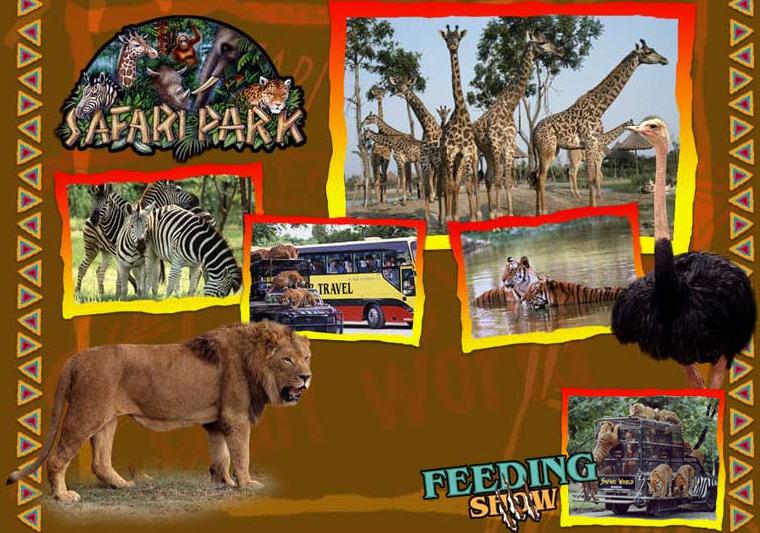 Safari World : Feeding Show (Bangkok - Thailand)